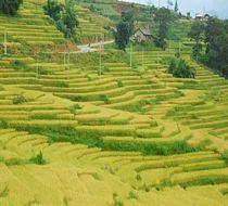 Real Vietnam Tour - 17 Days Reviews